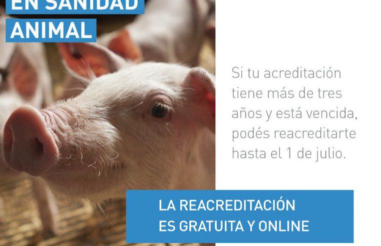 Reacreditación en Sanidad Animal